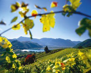 Die sonnigen Weinberge im Süden des Landes rund um den Kalterer See bieten Gästen und Einheimischen zur Herbstzeit Ruhe und Genuss.