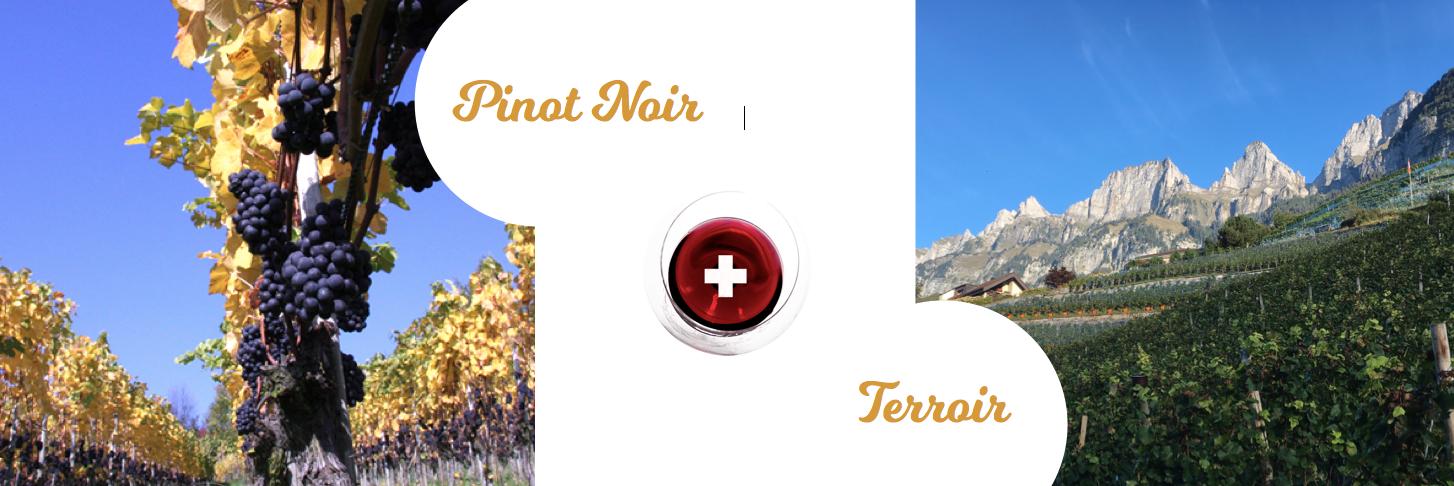 Schweiz_PinotNoir_Terroir