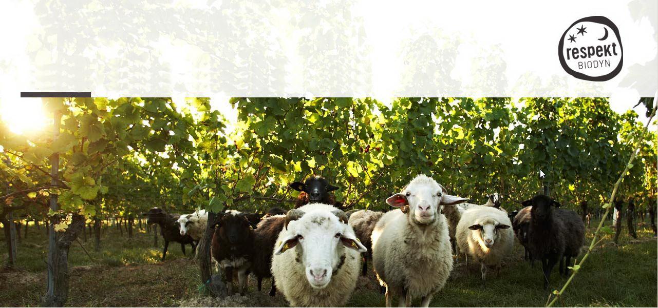 respekt-BIODYN _ biodynamischer Wein