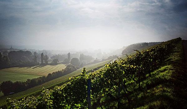 Franken_Weinregionen__2_