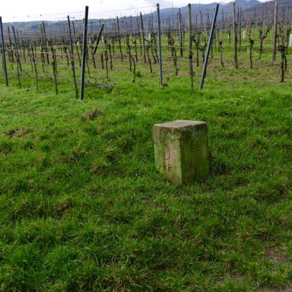 vinocentral-Livestream 3 Gläser mit Johannes Jülg