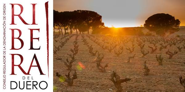 Eine Reise durch die Weinregion Ribera del Duero – von West nach Ost