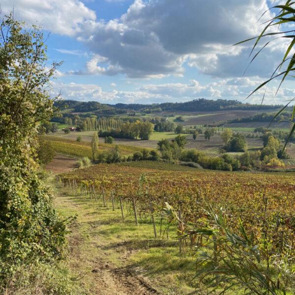Herbstliche Speisebegleiter aus Italien – vinocentral-Livestream 3 Gläser